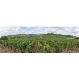 Fine Art 20x60 - Panorama of the Wine of Meursault, Bourgogne