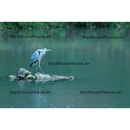 Toile Fine Art 20x30 - Heron Reflection on the rock