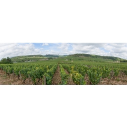 Toile Fine Art 20x60 - Panorama of the Wine of Meursault, Bourgogne
