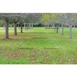Toile Fine Art 20x30 - Apple Trees Path