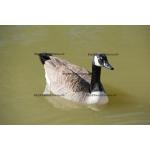 Fine Art 20x30 - Canada Goose #2