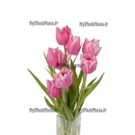 Toile Fine Art 20x30 - Zoom on a bunch of Tulips
