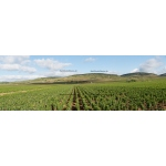 Toile Fine Art 20x60 - Panorama of the Wine of Beaune, Bourgogne