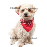 Toile Fine Art 20x30 - Yellow dog with a red bandana