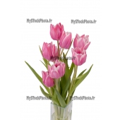 Zoom on a bunch of Tulips in a vase (top view)